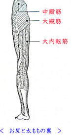 出張専門こしがや鍼灸治療所 股関節の痛み