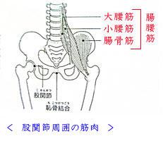 出張専門こしがや鍼灸治療所 股関節の痛み 股関節痛