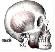 出張専門こしがや鍼灸治療所 顎関節症 顎の痛み